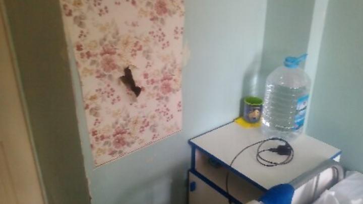 В первой больнице отремонтируют стены и дотравят последних тараканов