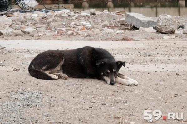 Проблема бездомных животных в Перми стоит уже давно