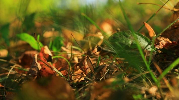 В Ярославской области больше суток ищут пенсионерку, заблудившуюся в лесу
