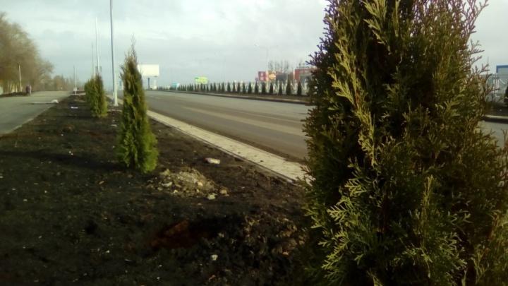Подрядчик реконструкции Московского шоссе в Самаре попросил полить туи