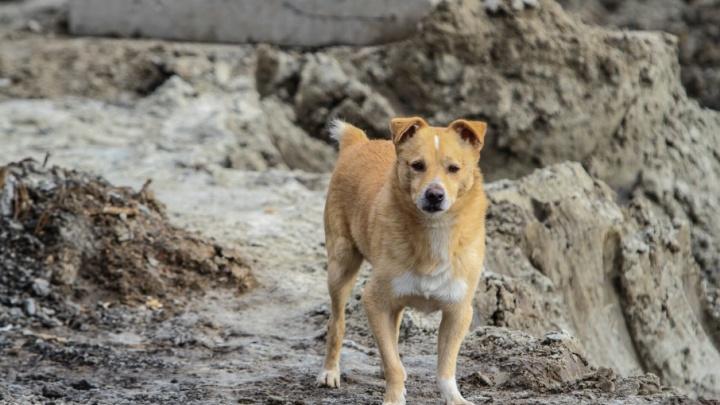 На Дону мужчину оштрафовали за неправильное захоронение собаки