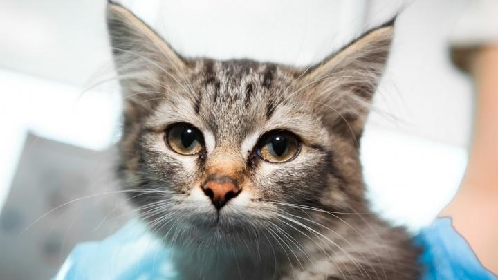 Сотрудники 74.ru спасли котёнка, попавшего под машину на улице Труда