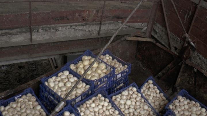 Новые жертвы санкций: в Самарской области сожгли 249 кг польских шампиньонов