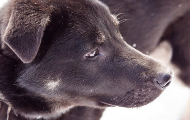 Ярославский приют для животных ищет хозяев своим питомцам