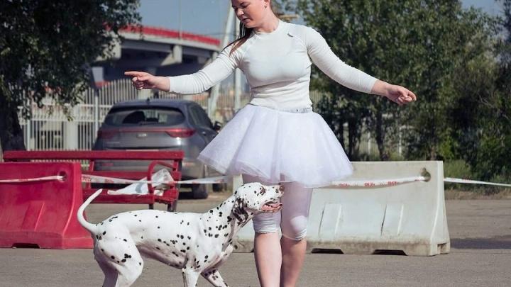Дамы с собачками: в Ростове прошел чемпионат по кинологическому фристайлу