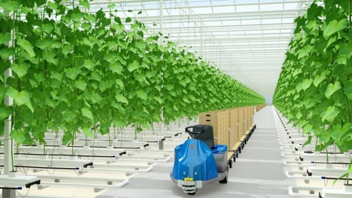 В Прикамье построят крупный агрокомплекс, где будут выращивать экологически чистые овощи и зелень