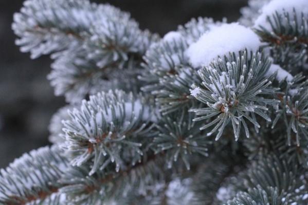 В новогоднюю ночь в Поморье — максимально до –2°С