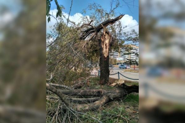 Просьбам жителей двора опилить деревья не вняли даже после того, как упавшее дерево помяло иномарку
