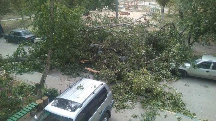 Денис Григорьев: «За упавшие на машины деревья заплатит администрация или управляющая компания»
