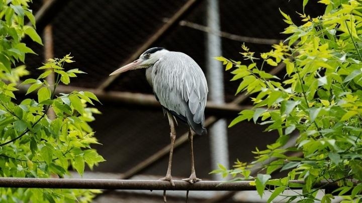 В ростовском зоопарке родилась цапля