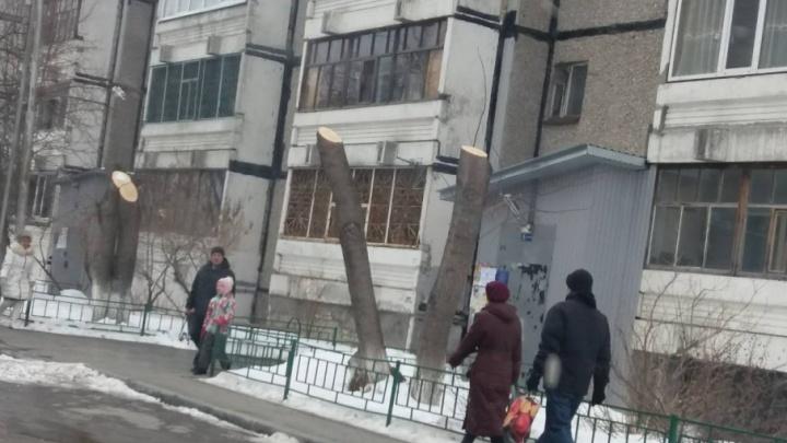 У многоэтажки на Федюнинского варварски обрезали деревья
