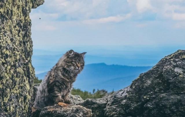 Котики рулят: читатели 74.ru выбрали лучшее фото августа