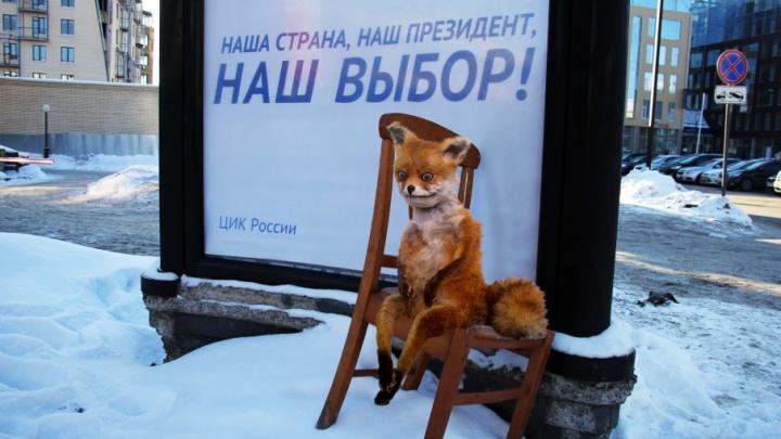 Выборы в стиле ню: почему президентская кампания в Поморье проходит так скучно