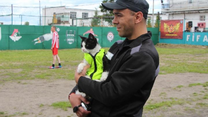 В Ярославской области кот-талисман поддержал спортсменов на соревнованиях перед ЧМ-2018