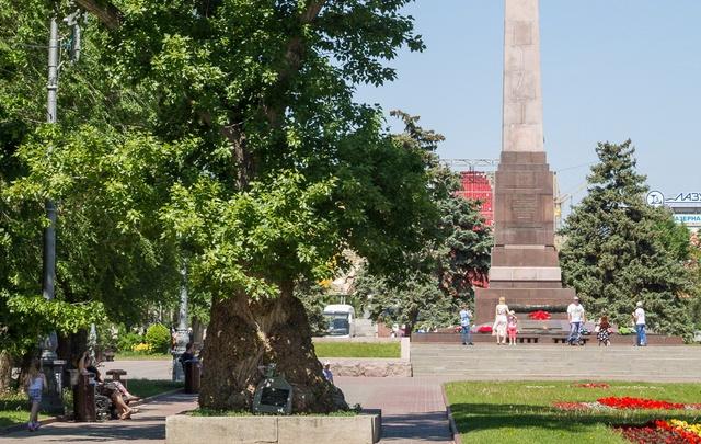 Сталинградский тополь с Аллеи Героев