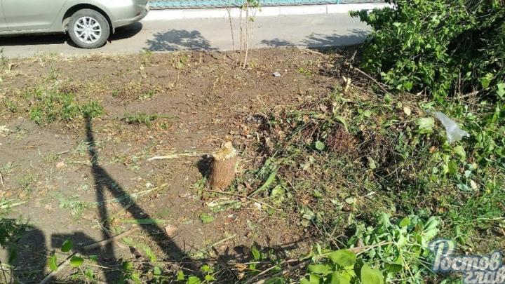 На Волкова деревья и кустарники спилили ради парковки