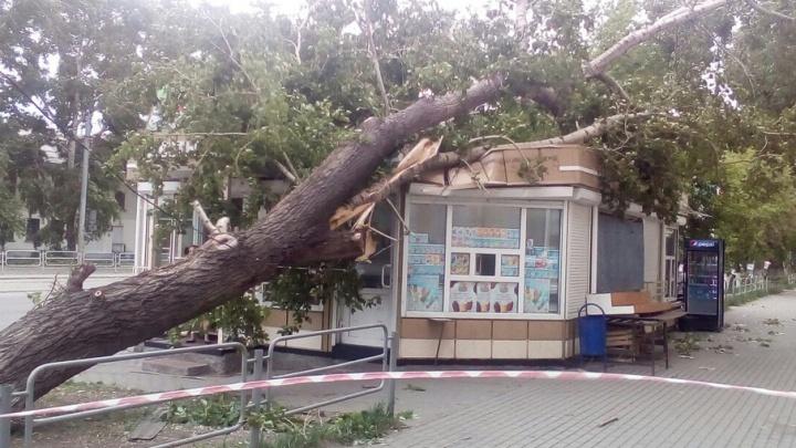 Ветер и мрак: Тефтелев поручил главам районов устранить последствия урагана