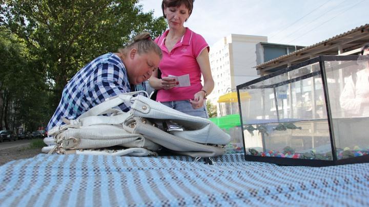 Опасно для жизни: в Брагино власти прогнали уличных торговцев черепахами
