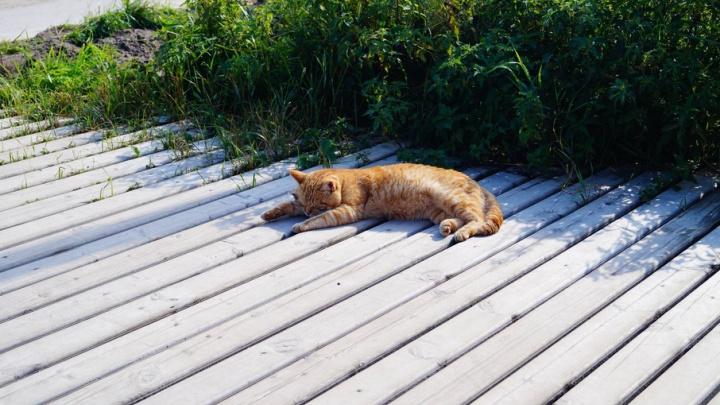 Северян ожидает теплая неделя с дождями