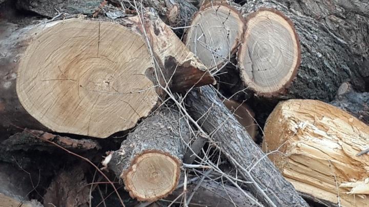 В Краснооктябрьском районе под киоски вырубают деревья