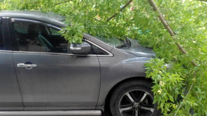 Ураган в Челябинске: что делать, если на машину рухнуло дерево