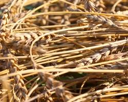 Косилов: урожай соберем сполна