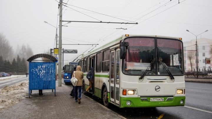 К самой популярной ярославской купели пустят ночной автобус: маршрут