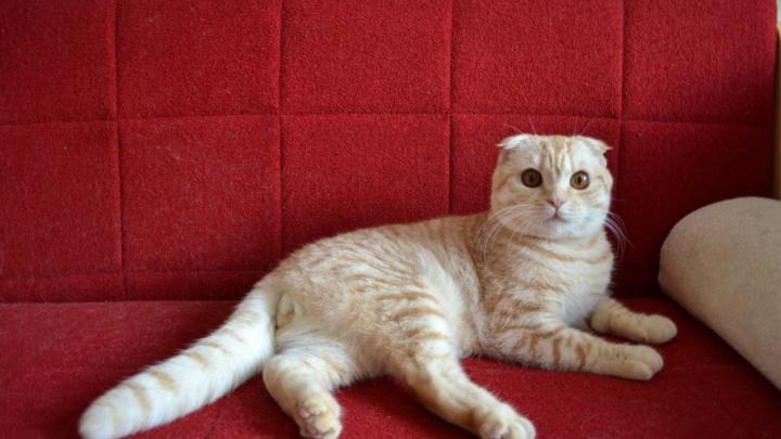 Эксперты назвали самые популярные породы кошек в Ростове