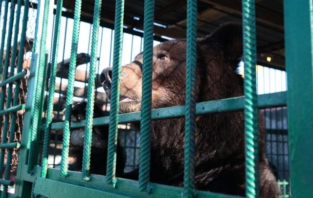 Медведицу из разорившегося томского зоопарка доставили в Челябинск