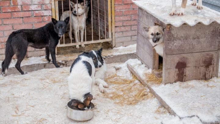 В Самаре поймают, вылечат и выпустят еще 1480 бездомных животных