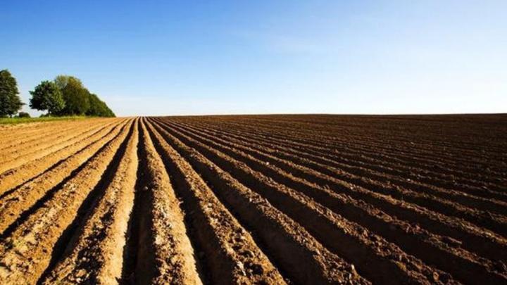 В Поморье 296 млн рублей господдержки сельского хозяйства помогли завершить посевную компанию
