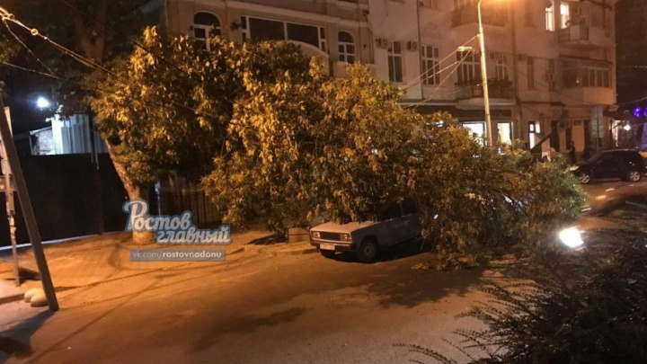 На Пушкинской дерево упало на провода