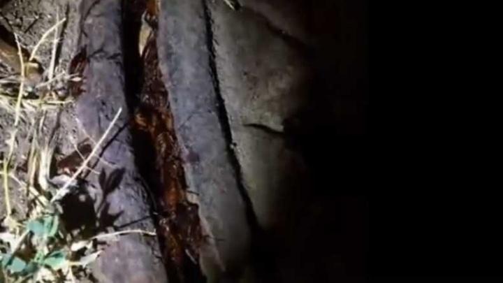 «Адское логово»: жители Портовой пожаловались на нашествие тараканов