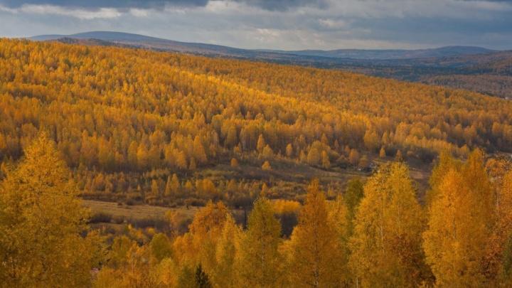 Золотые леса, еноты и лисы: выбираем лучшее фото октября