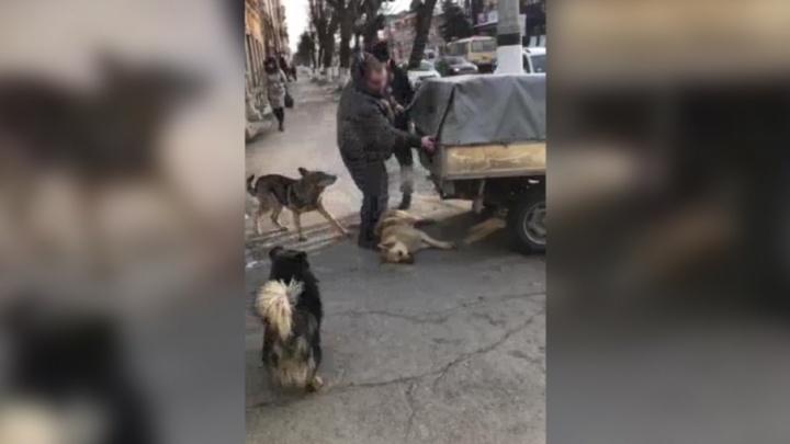 В мэрии Сызрани прокомментировали инцидент с собакой на улице Советской
