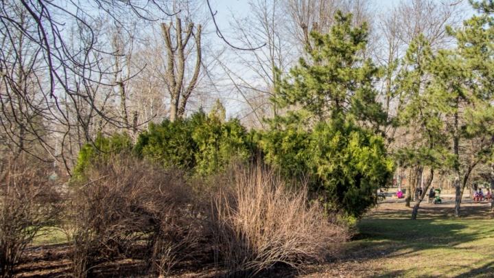 Вересаевский парк в Ростове пообещали привести в порядок до 2020 года