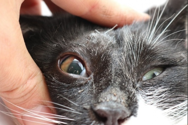 Кот перенёс множество операций и восстановительную терапию