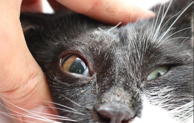 В Ростове коту выстрелили в глаз из арбалета