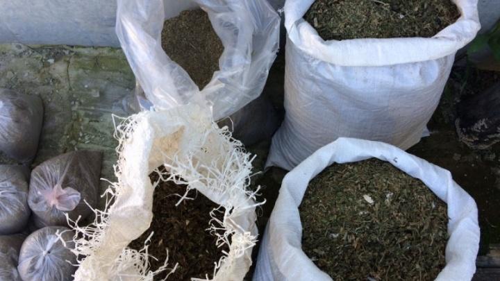 В Волгоградской области у женщины изъяли более 20 килограммов марихуаны