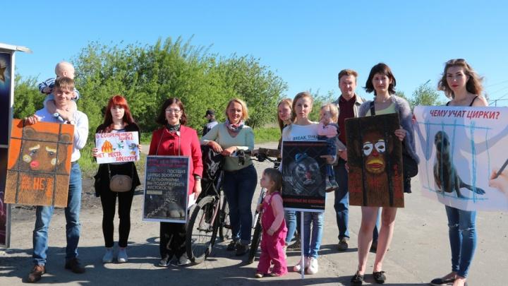 Северодвинцы вышли на массовый пикет против использования животных в цирке