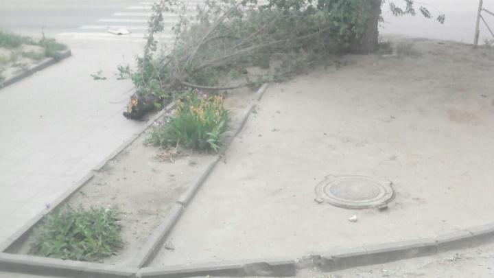 В Волгограде сильный ветер валит деревья