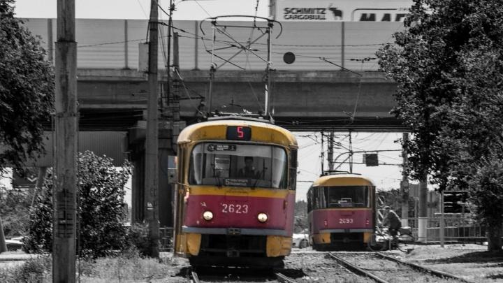Стремительное тело и цвета хищника: волгоградский трамвай впечатлил приезжего фотографа