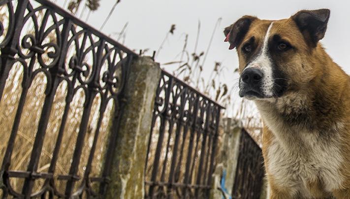 Бешеный пес напал на двух рабочих в Ростовской области