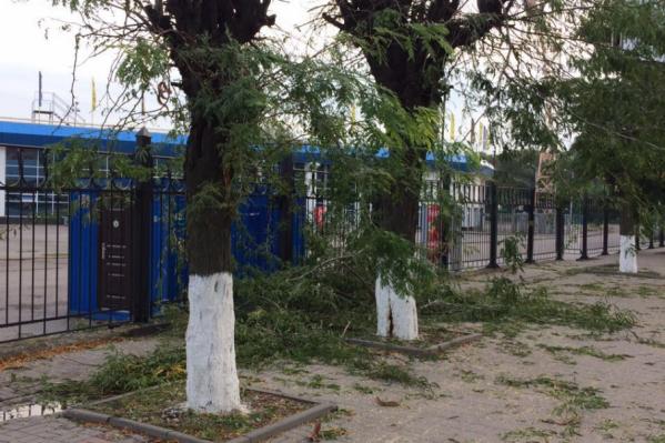 Возле стадиона «Олимп-2» спилили деревья