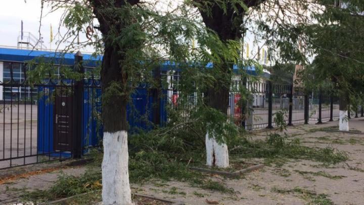 Энергетики спилили деревья рядом со стадионом «Олимп-2»