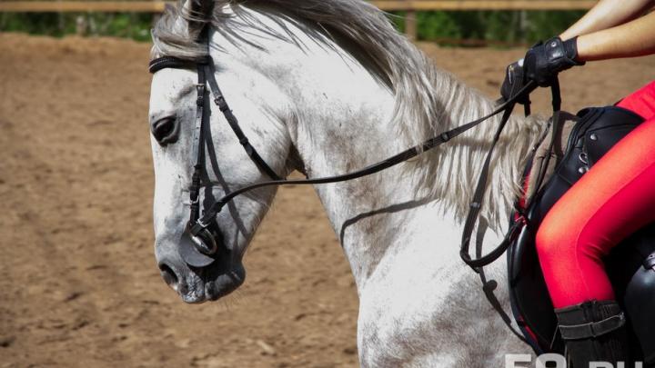 Житель Свердловской области подал в суд на пермский колхоз: его жена погибла в ДТП с табуном лошадей
