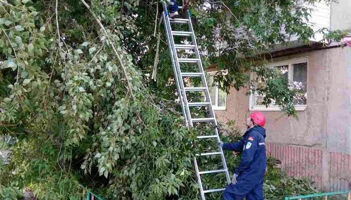 Дерево рухнуло на балконы жилого дома в Челябинской области