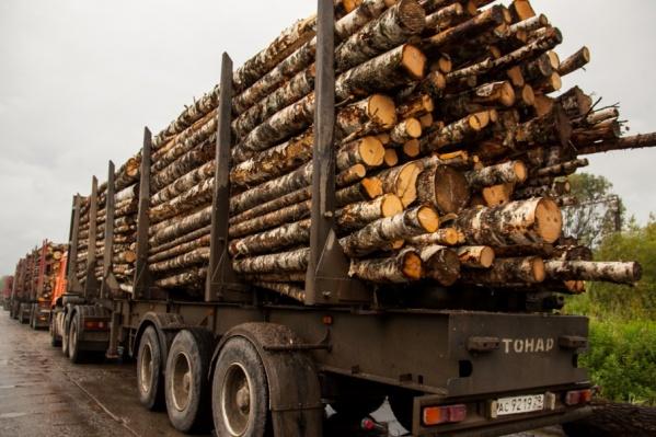 С 2015-го специалист пропускал груженые лесом автомобили с изрядным перевесом