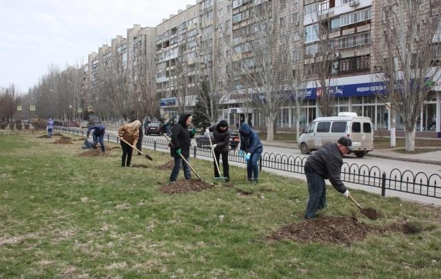 В Красноармейском районе Волгограда появилась каштановая аллея