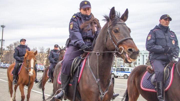 Самарские полицейские наймут на работу шесть лошадей
